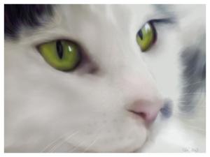 Digital pet portrait