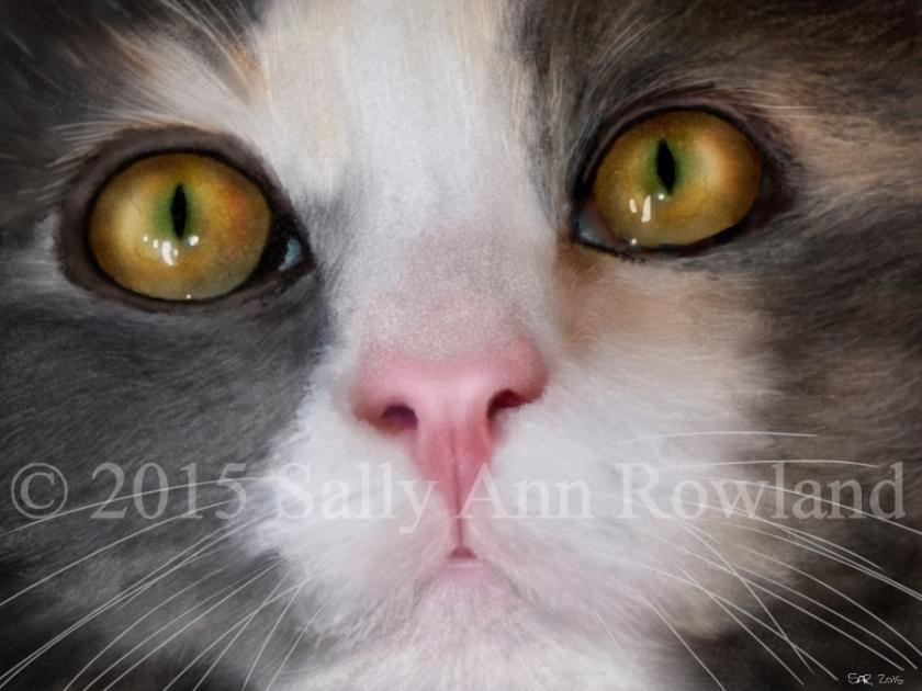 Catportrait