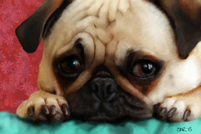 Study - Pug Puppy