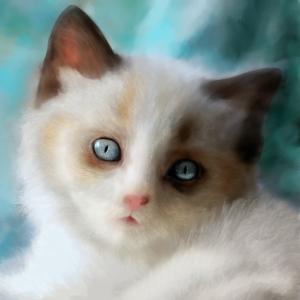 KittenWIP Full