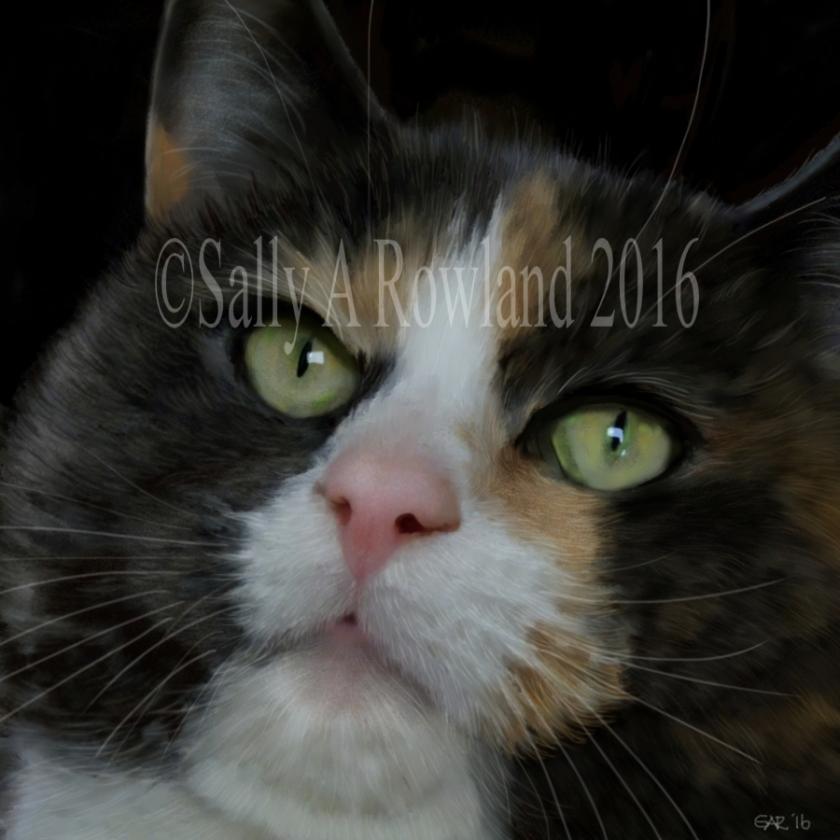 catprofile copyright pic